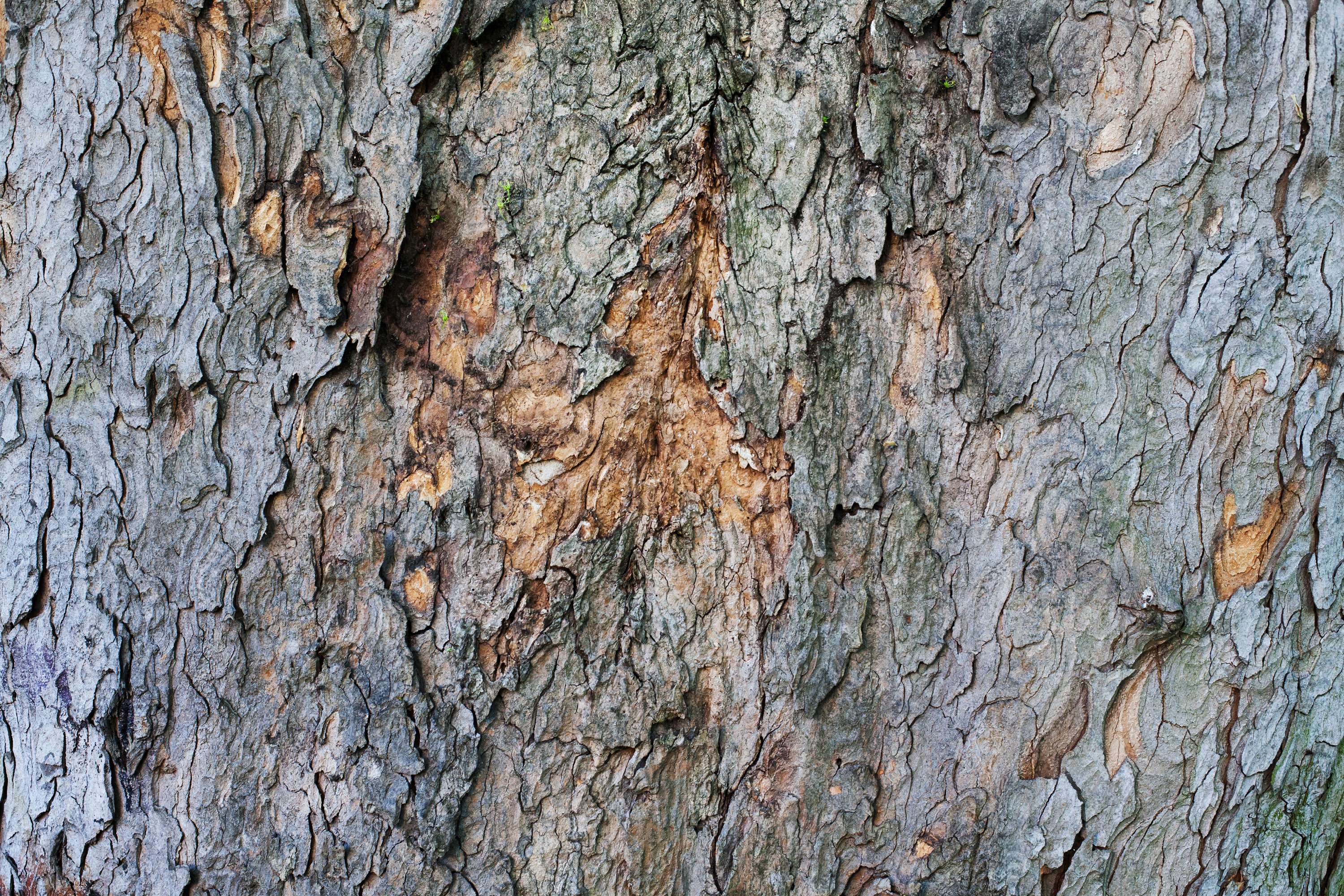 Wild textures free high resolution textures backgrounds and -  Texture Tree Bark Background Free High Resolution