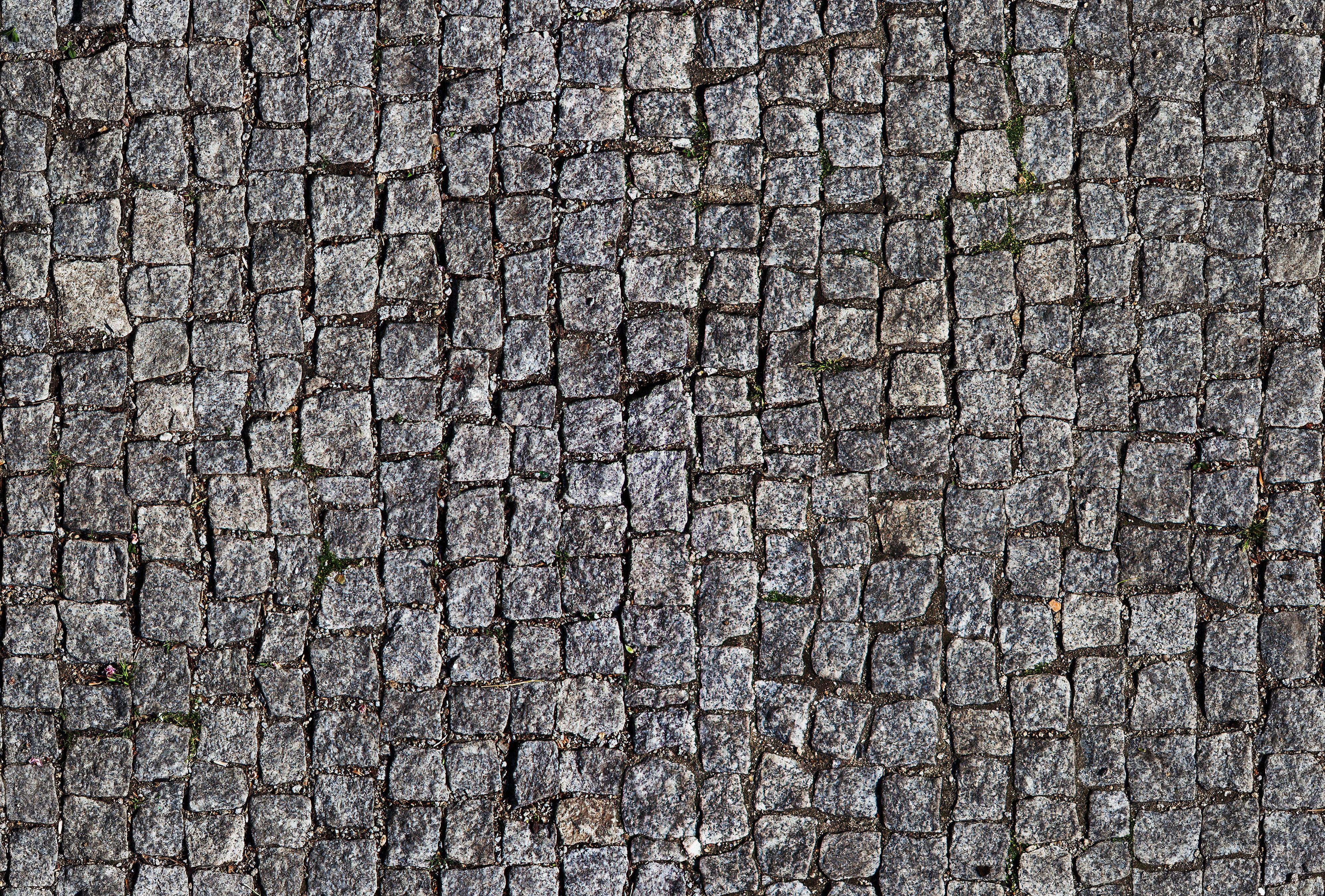 Seamless Granite Pavement Texture Wild Textures