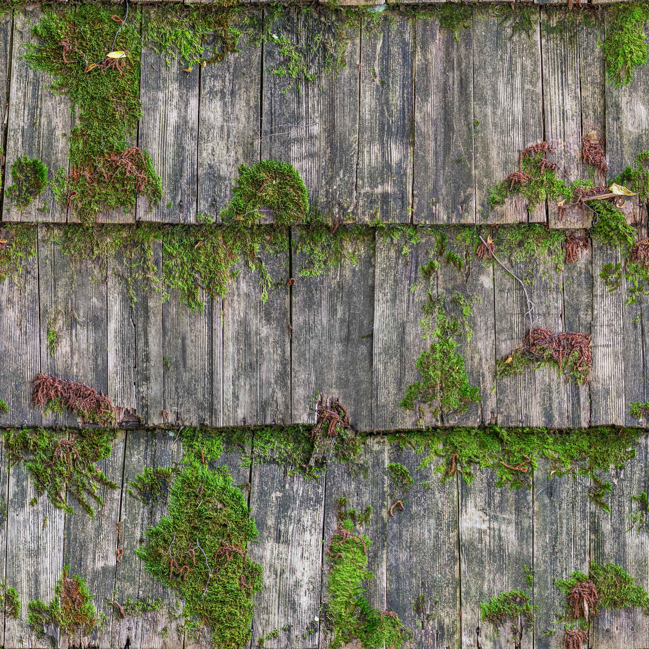Wood Mossy Roof Seamless Texture